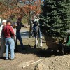 Andover Lions Club Plants New Town Christmas Tree