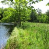 Gracia Snyder Trust Donates 213  Acres in Salisbury to Forest Society