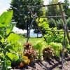 WCA and Wilmot Garden Club to Host Sustainable Gardening Workshops