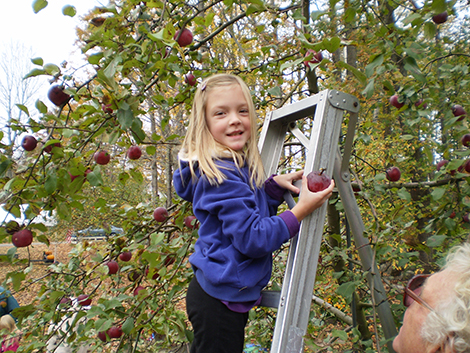 AppleFest At Highland Lake Apple Farm