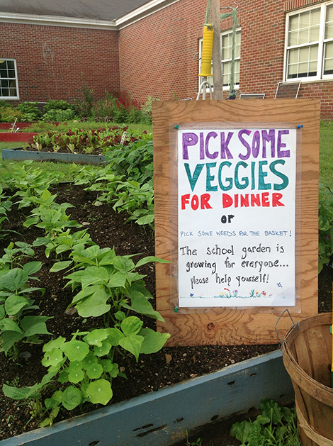Enjoy the Bountiful Harvest at the School Garden