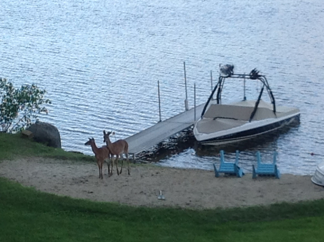 Deer at Highland Lake