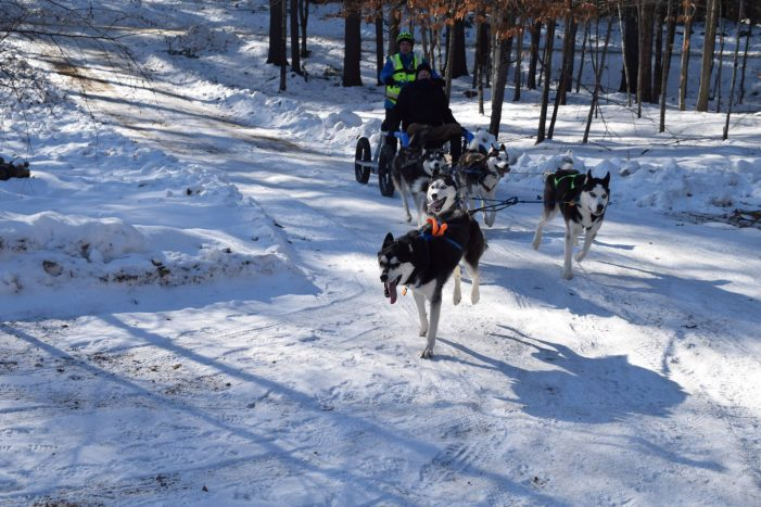 Ragged Mountain Mushing: It's All About the Dogs
