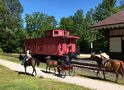 Carriage Driving on the Rail Trail