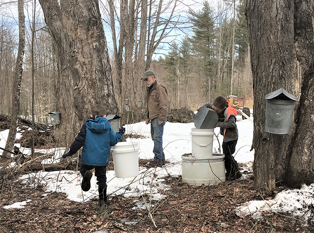 Mark Cowdrey, Owner of Ragged View Farm, Collects Sap