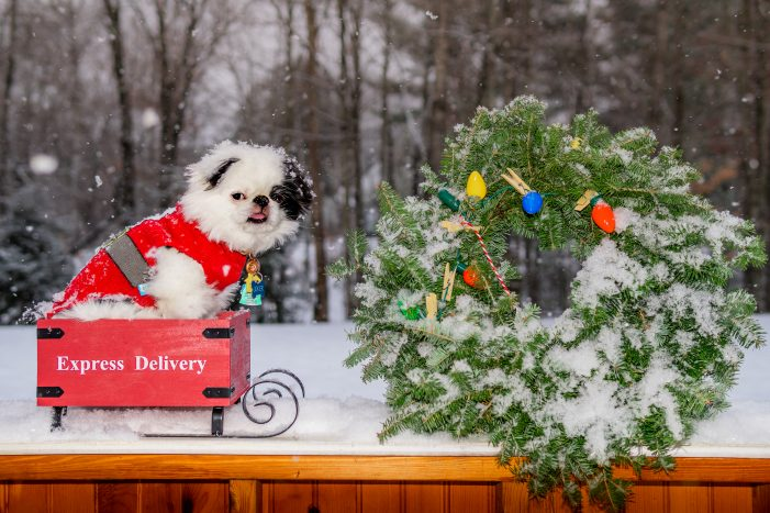 Andover Resident's Dog Shows Holiday Cheer