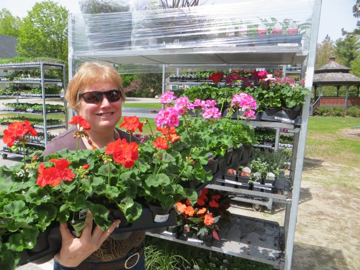 Wilmot's Annual Plant Sale Resumes After 2020 Hiatus