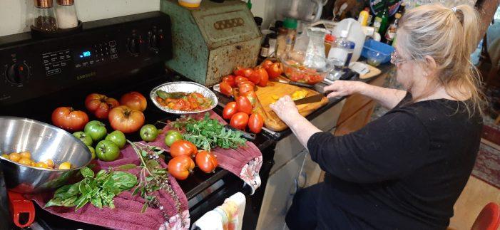 Bumper Tomato Crop is a Dream Come True