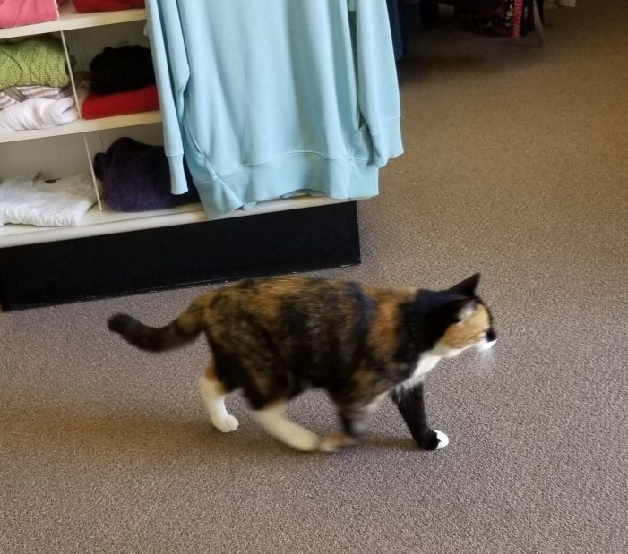 Thrifty Kitty Shops for a Bargain at the ASC Shop
