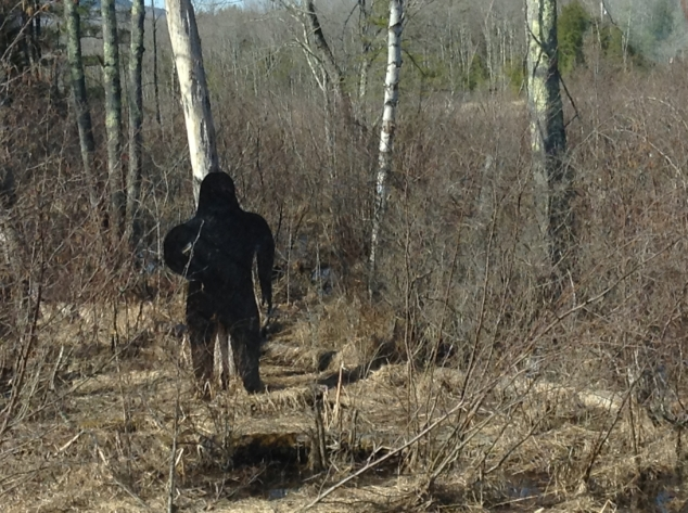 Many Andoverites have reported sighting Sasquatch recently, and I, myself, was fortunate to snap this photo at the foot of Boston Hill Road, near the Rail Trail on April 14, in broad daylight. Photo and caption: Heather Makechnie